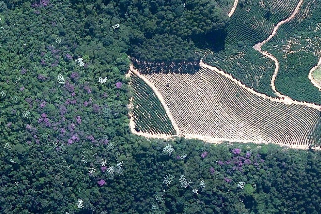 Alguns dos usos do solo mais comuns no ES, mas não na proporção real: floresta nativa, eucaliptal e café